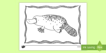 Platypus Mindfulness Colouring Page - Australian Mindfulness Colouring,Australia