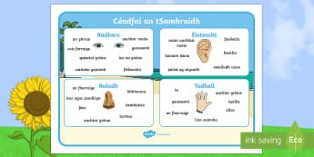 Mata Focail: Céadfaí an tSamhraidh - Summer Senses Word Mat, an samhradh, summer senses, na céadfaí, mata focail, word mat, word, focal