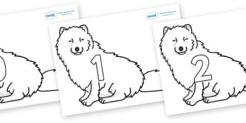 Numbers 0-50 on Arctic Foxes - 0-50, foundation stage numeracy, Number recognition, Number flashcards, counting, number frieze, Display numbers, number posters