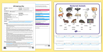 EYFS While We Are Sleeping Adult Input Plan and Resource Pack - Light and Dark, Nocturnal, Night time, diurnal, sleep, animals, night-time,