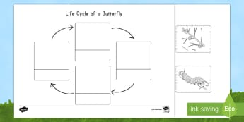 Life Cycle of a Butterfly Cutting Skills Activity Sheet - USA Early Childhood Science: Life Cycles, butterfly life cycle, butterfly cutting practice, life cyc