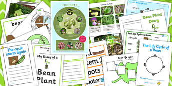 Life Cycle of a Plant - life cycle of a plant, bean, life cycle