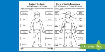 Parts of the Body Activity Sheet Te Reo Maori - Parts of the Body,Ngā Wāhanga o te Tinana,Body,Te Reo Maori Parts of the Body, worksheet