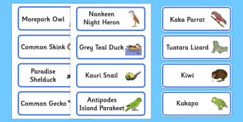 New Zealand Animals Word Cards - New Zealand Animals Display Posters, animals, New Zealand, word cards, cards, flashcard, kiwi, parakeet, gecko, skink, grey teal, parrot, paradise shelduck