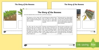 The Story of the Banana Ordering Activity Sheet - The story of the banana, geography, climate, imports, fair trade, tropical climates, climates, conti