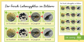 Der Lebenszyklus des Frosches Wort- und Bildkarten - Frosch, Frühling, Kaulquappe, Froschlaich, Jungfrosch, spring, frog, life cycle, frogspawn, froglet