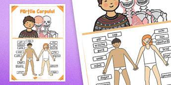 Părțile corpului uman - Planșă cu imagini și cuvinte - părți ale corpului, corpul meu, corp, științe, planșă, imagini, cuvinte, materiale, materiale didactice, română, romana, material, material didactic