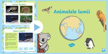 Animale din jurul lumii  PowerPoint - lumea vie, științe, animalele lumii, tipuri de animale,Romanian