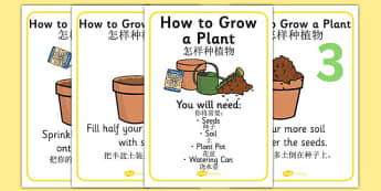How to Grow a Plant Display Posters Chinese Mandarin Translation - chinese mandarin, Plant, Growth, Topic, Foundation stage, Flower, knowledge and understanding of the world, investigation, living things, labelling, labelling plant