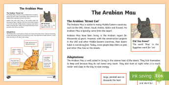 Arabian Mau Fact File - Science: Living World, animals, cats, Middle East, UAE, adaptations, UAE, desert, fact file.