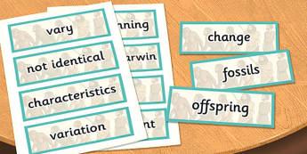 Year 6 Evolution and Inheritance Scientific Vocabulary Cards