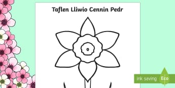 Daffodil Colouring Sheet Welsh - daffodil, colouring, colour, welsh, cymraeg, colour, spring, season, activity