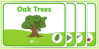 Editable Class Group Signs (Trees) - Tree, trees, group labels, group table signs, table sign, teaching groups, class group, class groups, table label, oak, birch, beech, cherry, willow, chestnut