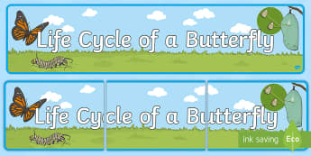 Life Cycle of a Butterfly Display Banner - USA Early Childhood Science: Life Cycles, butterfly life cycle, life cycle of a butterfly, butterfly