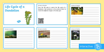 Life Cycle of a Dandelion Code Hunter - QR Codes, plant, life cycle, seed, pollination, wind dispersal, video, growth, germination, dandelio