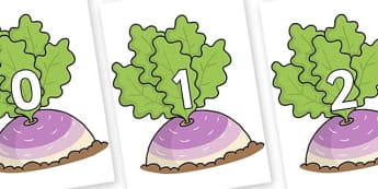 Numbers 0-31 on Turnip in the Ground - 0-31, foundation stage numeracy, Number recognition, Number flashcards, counting, number frieze, Display numbers, number posters