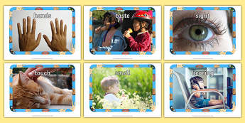 My Senses Display Photos