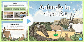 Animals in the UAE PowerPoint - ADEC, MOE, UAE, animals, emirates, non fiction, factual, facts, information,