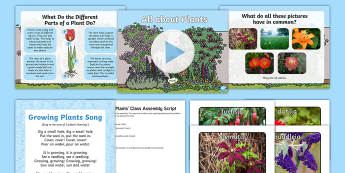 KS1 All about Plants Class Assembly Pack - Growth, Seed, Presentation, Team Work, Flowers