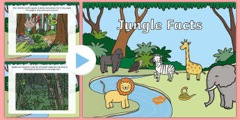 Jungle Facts PowerPoint - powerpoint, facts powerpoint, jungle powerpoint, facts, jungle, animals, plants, trees, information powerpoint, information
