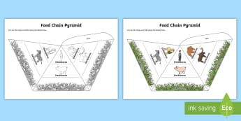 Food Chain Pyramids Foldable Visual Aids - food chain, pyramids