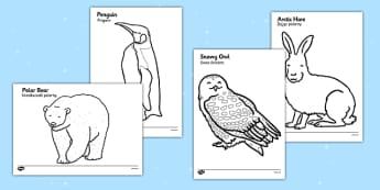Arctic Animals Colouring Images Polish Translation - polish, arctic, animals, colouring, images, colour