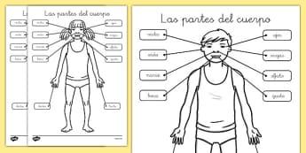 Ficha de etiquetar las partes del cuerpo - sentidos Mi cuerpo