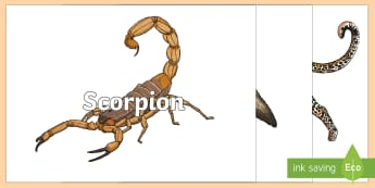 Desert Themed Words on Desert Images - UAE, ADEC, MOE, animals, emirates, information, non fiction, science , lizard, onyx, science