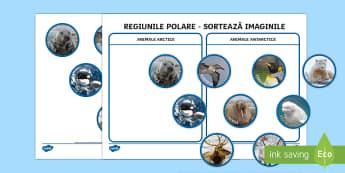 Regiuni polare - Activitate de sortare - animale de la poli, română, materiale, polar, jocuri, animale polare, arctic, antarctic, jocuri, a