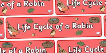 Robin Life Cycle Display Banner - display, banner, display banner, robin display banner, robin life cycle banner, life cycle of a robin banner, robin