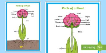 Parts of a Plant Display KS2 - - plants, flowers, stem, leaf, roots, leaf,