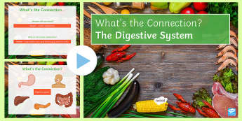 The Digestive System What's the Connection? PowerPoint - KS4 What's the Connection?, Digestion, Digestive System, Mouth, Oesophagus, Stomach, Small Intestin