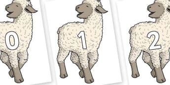 Numbers 0-50 on Lamb - 0-50, foundation stage numeracy, Number recognition, Number flashcards, counting, number frieze, Display numbers, number posters