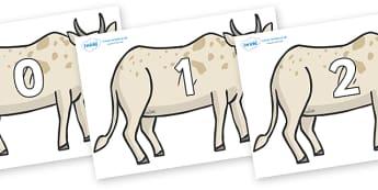 Numbers 0-31 on African Ox - 0-31, foundation stage numeracy, Number recognition, Number flashcards, counting, number frieze, Display numbers, number posters