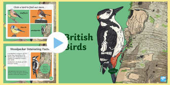 British Birds PowerPoint - british birds, chaffinch, Robin, Woodpecker, Blue Tit