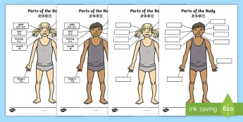 Parts of the Body Senses Labelling Activity Sheet English/Mandarin Chinese - worksheet, body, ourselves , sences, sesnses, oursleves, ourselvs, sesnes, EAL