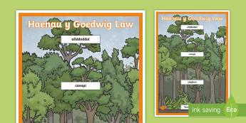 Poster Arddangos A4 Mawr Haenau Y Goedwig Law - rainforest, coedwig, glaw, fforest, poster, arddangos,Welsh