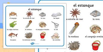 Tapiz de vocabulario La poza - mar, costa, rocas, pez, aventura