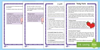 Sense of taste Differentiated Fact File English/French - Ourselves, senses, taste, tastebuds, sweet, sour, salty, bitter, nerves, tongue, mouth, eat, drink,