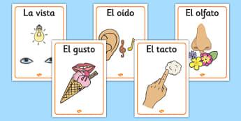Póster de los cinco sentidos - sentidos, tacto, gusto, oído, vista, olfato