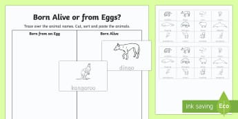 Born Alive or From Eggs? Cut and Paste Activity Sheet - Australian Curriculum Biological science, eggs laying animals, eggs, Australian animals, egg laying,