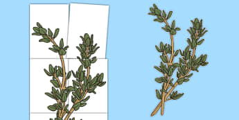 Large Thyme Cut Out Display - herb, display posters, display, posters