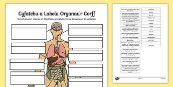 Gweithgaredd Cyfatebu a Labelu Organau'r Corff - sgerbwd, welsh, cymraeg, paru, labelu, corff, organau