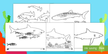 Sharks Colouring Pages - Lapbooks, wet play, under the sea, fish, animals, worksheet, boys