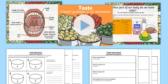 KS1 Science Senses Taste PowerPoint English/Romanian - KS1 Science Senses Taste PowerPoint - sense, senses, tasting, sences, sesnses, sceince, taste pp, se