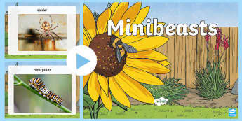 Minibeasts Photo  PowerPoint - Insects Photopack - insects, photopack, minibeast, art, photos, minbeast, powerpoint, ppt, animals,