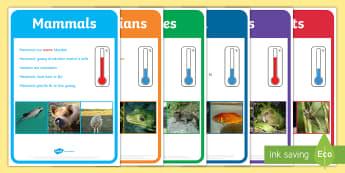New Zealand Animal Groups Display Posters - New Zealand, Birds, Native, Activity Sheet, Habitat, posters, animals