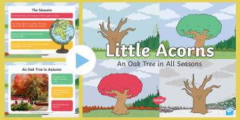 An Oak Tree in All Seasons PowerPoint - Twinkl originals, fiction, little acorns, KS1, EYFS, Science, spring, summer, autumn, winter, plants