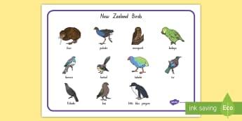 New Zealand Bird Word Mat - New Zealand, Birds, Native, Habitat, word mat