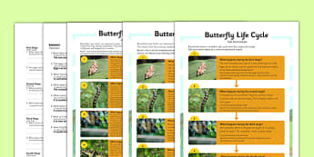 Butterfly Life Cycle Differentiated Reading Comprehension Activity Polish Translation - polish, butterfly life cycle, butterfly, life cycle, differentiated, reading, comprehension